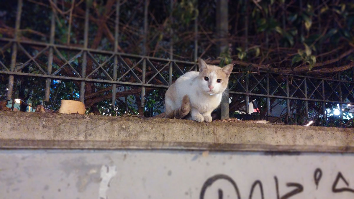 cats-athens
